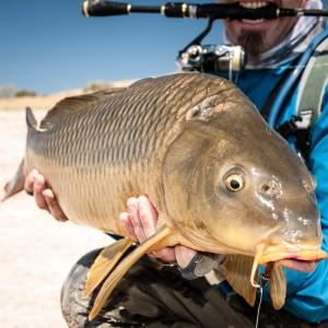 Las experiencias de pesca a la carpa con vinilos