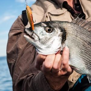 Las experiencias de pesca en la captura de la dorada a spinning