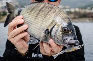 Capturas ocasionales en la pesca a spinning